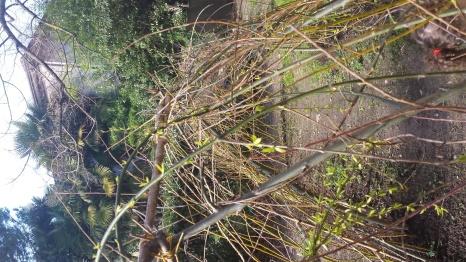 Il parco del nido scoiattolo si risveglia...